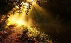 Tree, River, Sunlight