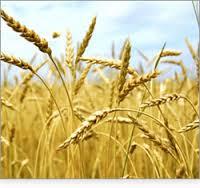 Fields for Harvest
